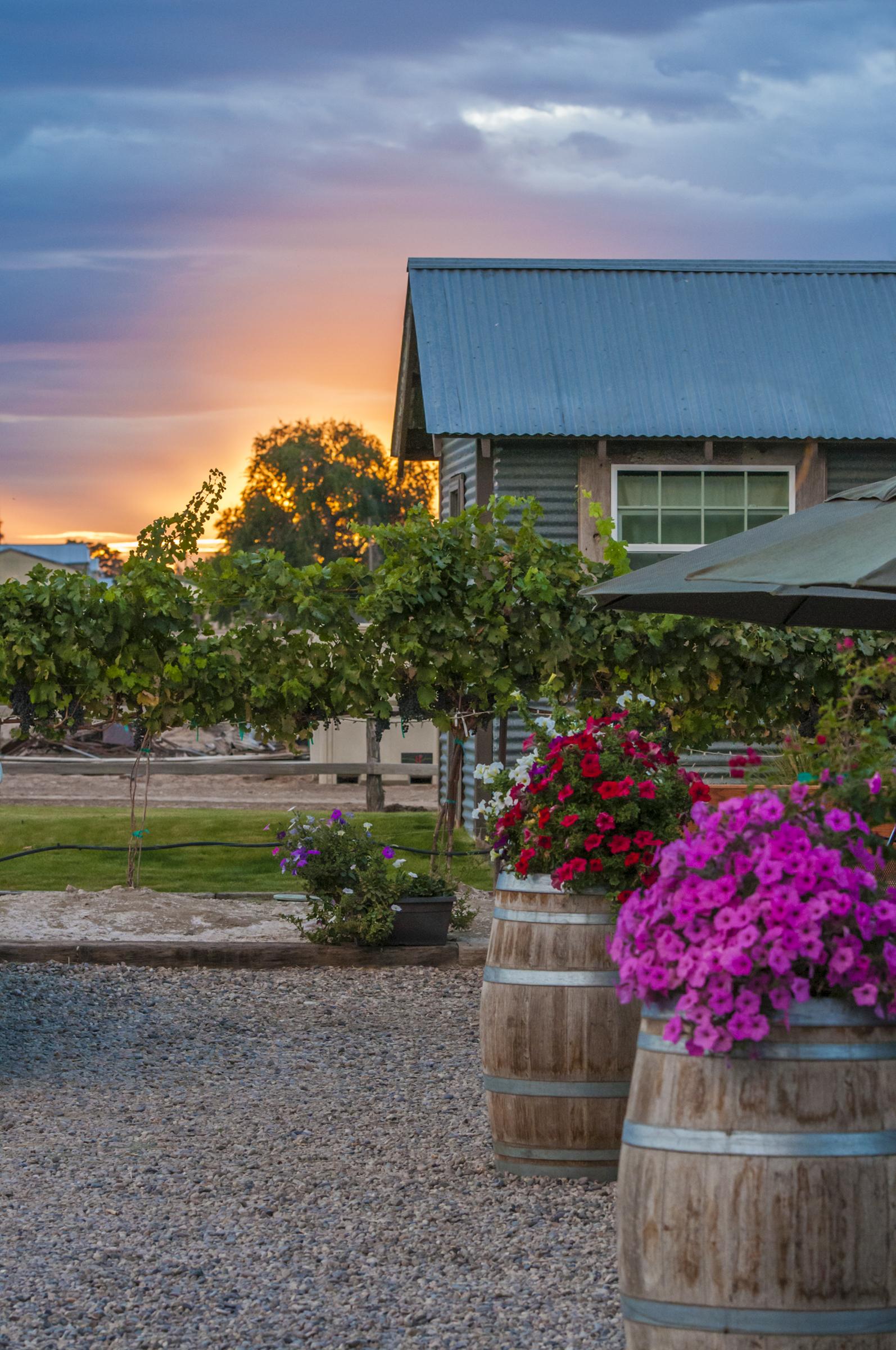 Sunset over Huston Vineyards