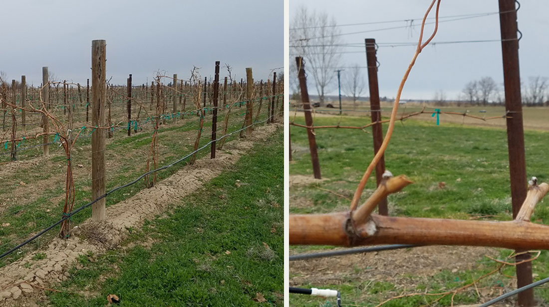 Springing forward at Huston Vineyards
