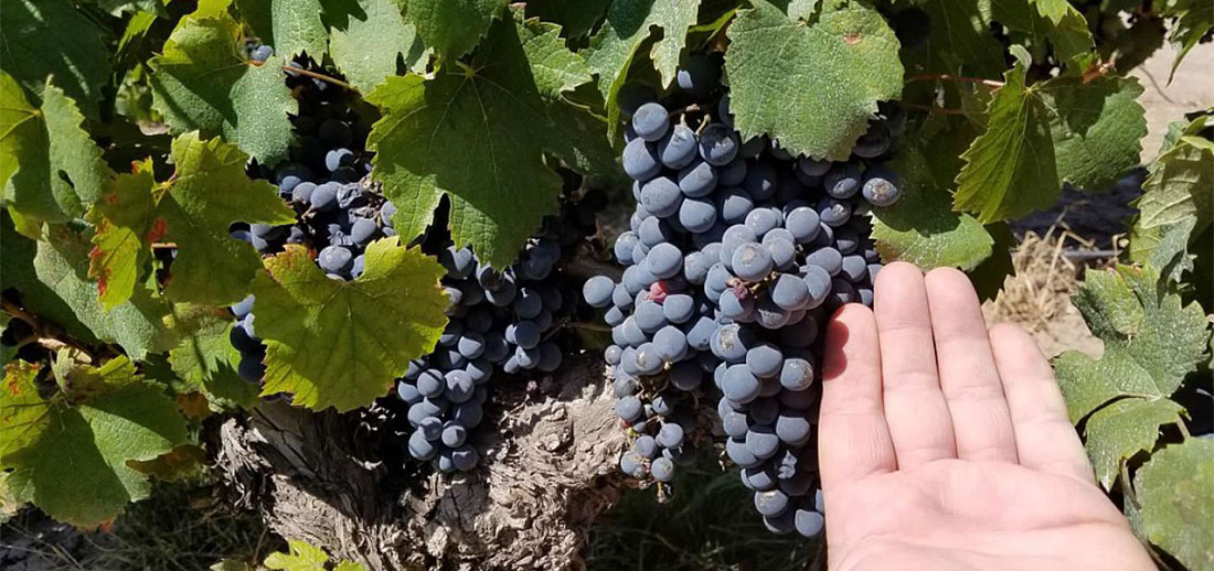 Why do we love to celebrate Malbec at Huston Vineyards?